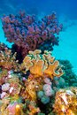 Coral Reef With Great Hard And Soft Corals At The Bottom Of Tropical Sea Stock Images - 28811244