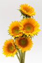 Sun Flower Stock Photo - 28817900