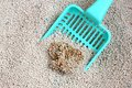 Cat Litter With Cat Sand Scoop Royalty Free Stock Images - 28826499