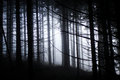 Very Gloomy Dark Forest Royalty Free Stock Photo - 28826735