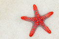 Red Starfish Stock Image - 28827641
