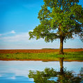 Pond With Reflection Of Tree Royalty Free Stock Photo - 28831765