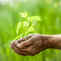 Young Plant Against Green Background Royalty Free Stock Photos - 28833818