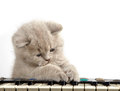 Kitten And Piano Stock Images - 28837234
