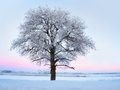 Tree With Rime Frost In Winter Landscape Stock Photo - 28862290