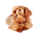 Decorative Red Dog Royalty Free Stock Images - 28886179
