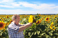 Elderly Farmer And Sunflowers Royalty Free Stock Photography - 28890417