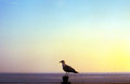 Seagull At Sea Stock Photography - 28904092