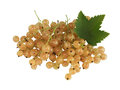 White Currant Stock Photography - 28919372