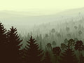 Wild Coniferous Wood In Morning Fog. Royalty Free Stock Photos - 28919768