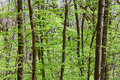 Deciduous (leaf) Forest Depths Royalty Free Stock Images - 28925029