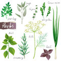Herbs Set Royalty Free Stock Photography - 28939857