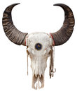 Buffalo Skull Royalty Free Stock Images - 28941919