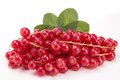Redcurrant Royalty Free Stock Images - 28957989