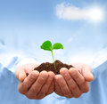 Man Hands Holding Green Plant. Royalty Free Stock Photos - 28966438