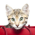 Cute Kitten In A Red Shopping Bag Stock Photography - 28966472