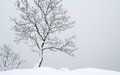 Stand Alone Tree Royalty Free Stock Photo - 28967645