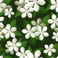 Seamless Background With White Flowers. Stock Photos - 28990073