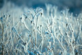 Hoarfrost On Branches Of Bushes Royalty Free Stock Image - 28994126