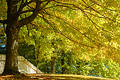 Sweeping Branches Of Fall Stock Photo - 292180