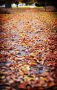 Fall Leaves Stock Photos - 295363