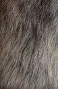 Polar Fox Fur Texture Royalty Free Stock Photography - 29009507
