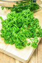 Green Curly Parsley Stock Image - 29083751