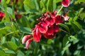 Red Flowers Stock Images - 29125724