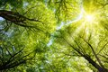 Sun Shining Through Treetops Royalty Free Stock Photo - 29145185