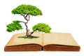 The Big Tree Growth From A Book Stock Photo - 29148660