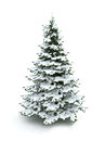 Spruce Tree (Christmas Tree) Covered With Snow Stock Photos - 29167893