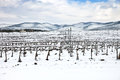 Vineyards Rows Covered By Snow In Winter. Chianti, Florence, Italy Royalty Free Stock Images - 29193089