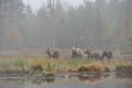 Bears In The Fog Stock Images - 29204544
