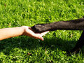 Paw In Hand (9) Royalty Free Stock Photography - 29272127
