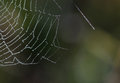 Spider Web Stock Photo - 29287900