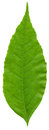Close-up Photo Of Green Leaf Stock Photography - 29289162
