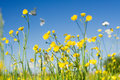 Cabbage White Butterfly Field Royalty Free Stock Photo - 2931415