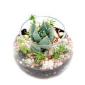 Group Of House Plants In A Round Glass Pot. Stock Photos - 29314003
