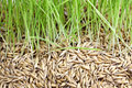 Green Grass And Seed Stock Image - 29336681