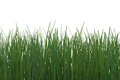 Wild Grass Royalty Free Stock Photography - 29341757
