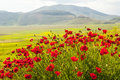 Landscape Of Piano Di Castelluccio Royalty Free Stock Photography - 29345247