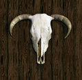 Cow Skull Royalty Free Stock Photo - 29364855