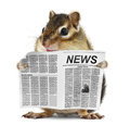 Funny Chipmunk Read Newspaper Stock Photos - 29370243