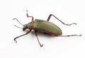 Ground Beetle Stock Image - 29372441