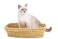 Cat Sits In Basket Stock Photography - 29378712