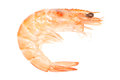 Prawn Royalty Free Stock Photography - 29395927