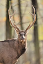 Deer Royalty Free Stock Photography - 29396627