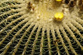 Cactus Close Up Stock Photo - 2942220