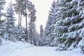 Small Country Road In Winter - Sweden Stock Images - 29416684