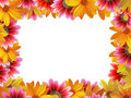 Flower Frame 3 Royalty Free Stock Photography - 2957327